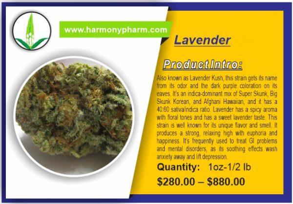 Buy Lavender